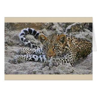 Lying leopard card