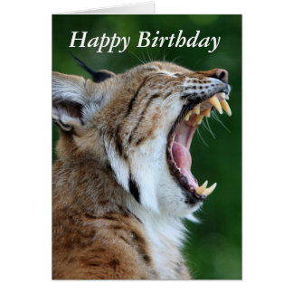 Lynx, bobcat beautiful photo happy birthday card