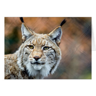 Lynx Bobcat Wildlife Predator Cat Card