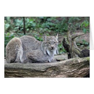 Lynx Custom Card