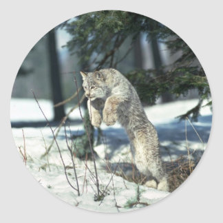 Lynx leaping, bounding on snow classic round sticker