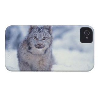 lynx, Lynx lynx, in the snow in the foothills of iPhone 4 Case-Mate Case