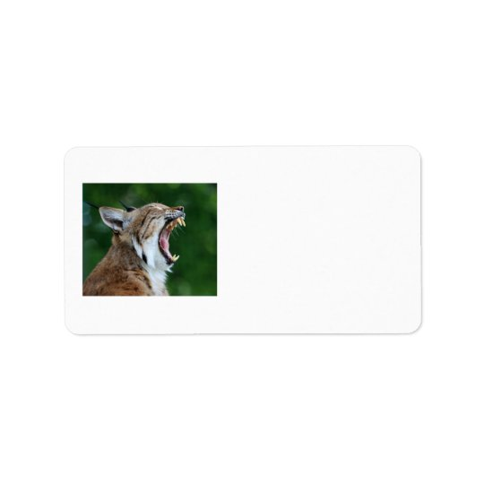 Lynx or bobcat beautiful photo labels