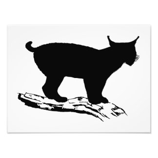 Lynx Silhouette Art Photo