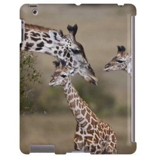 Maasai Giraffe (Giraffe Tippelskirchi) as seen