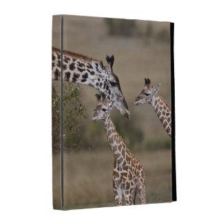 Maasai Giraffe (Giraffe Tippelskirchi) as seen iPad Case