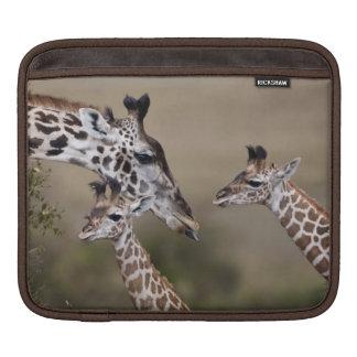 Maasai Giraffe (Giraffe Tippelskirchi) as seen iPad Sleeve
