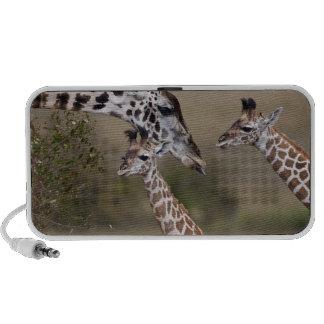 Maasai Giraffe (Giraffe Tippelskirchi) as seen Travel Speakers