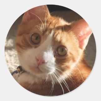 Mac Cat Photo Stickers