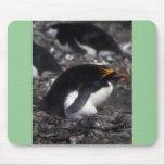 Macaroni Penguin Sitting On Egg Mouse Pads