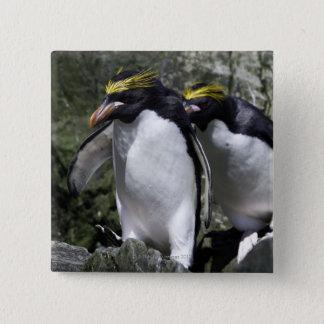 Macaroni Penguins, South Georgia 15 Cm Square Badge