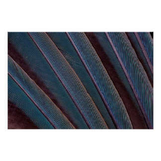 Macaw Blue Feather Close Up Poster