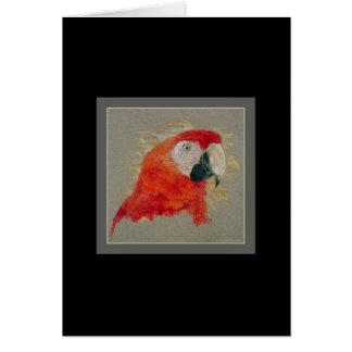 Macaw Card