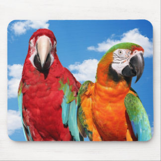 Macaw couple mouse pad