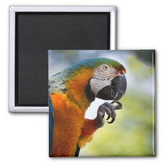 macaw fridge magnet