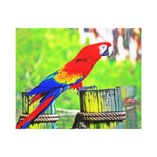 macaw hdr saturated bird image canvas print