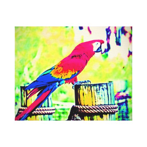 macaw hdr saturated bird image vignetted canvas print