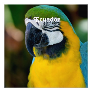 Macaw Personalized Announcement