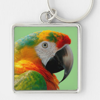 Macaw Key Ring