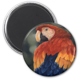 Macaw Magnet