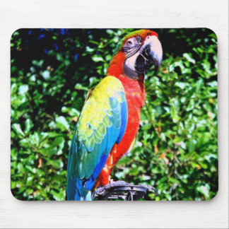 Macaw Mousepad