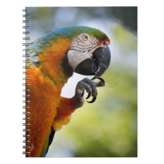 macaw note book