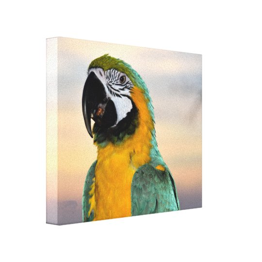 Macaw Parrot Canvas Print