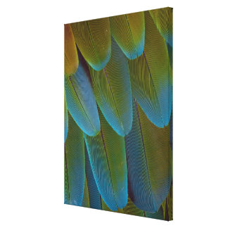 Macaw parrot feather pattern detail canvas print