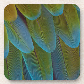 Macaw parrot feather pattern detail coaster