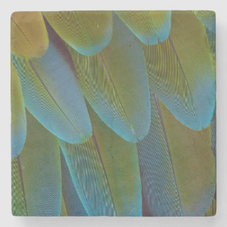 Macaw parrot feather pattern detail stone coaster
