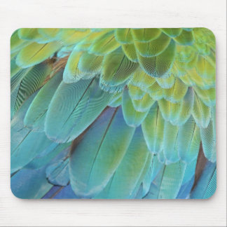 Macaw parrot feathers mouse pad