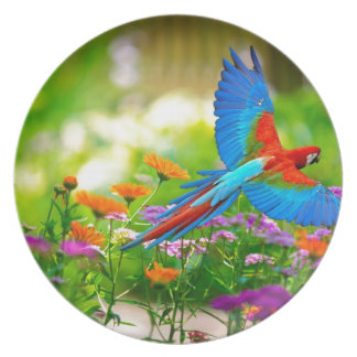Macaw Parrot Plate