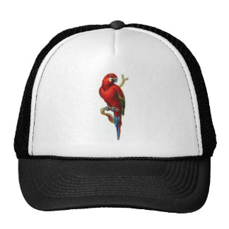 Macaw Red Parrot Trucker Hats