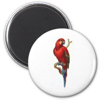 Macaw Red Parrot Magnet