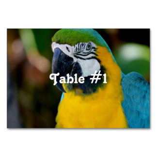 Macaw Table Card