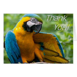 Macaw Thank You Notecards Card