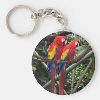 macaws key chain
