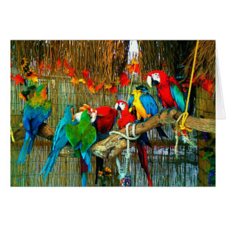 Macaws on Parade Card