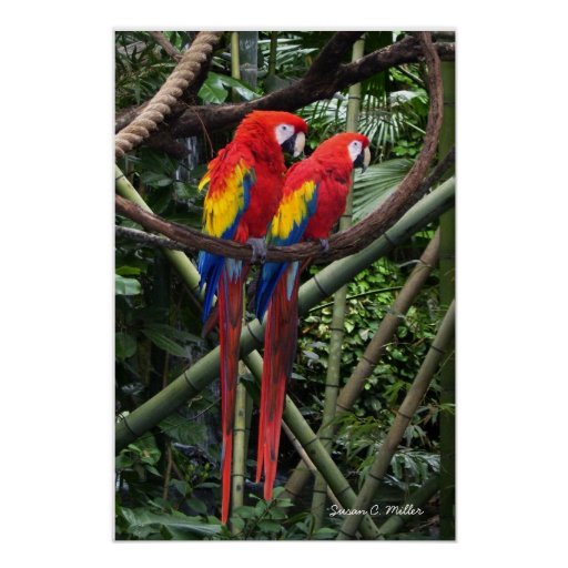 macaws print