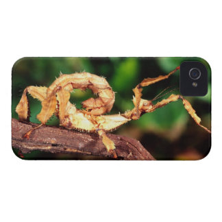 Macleay's Spectre (Spiney Stick Insect), iPhone 4 Case-Mate Case