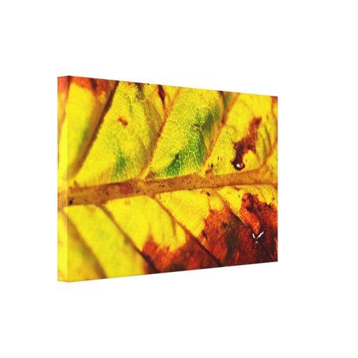 Macro Autumn Leaf Canvas Prints