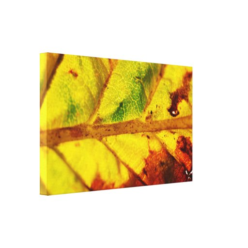 Macro Autumn Leaf Canvas Print