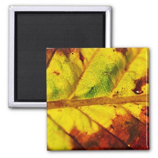 Macro Autumn Leaf Magnet