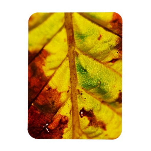 Macro Autumn Leaf Rectangle Magnets