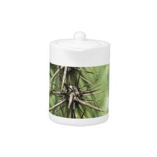 macro close up of cactus thorns