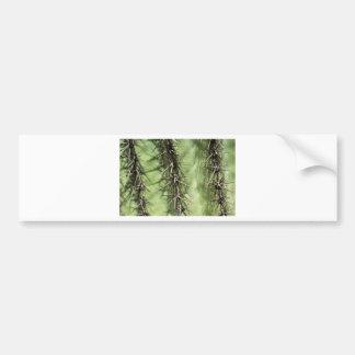 macro close up of cactus thorns bumper sticker
