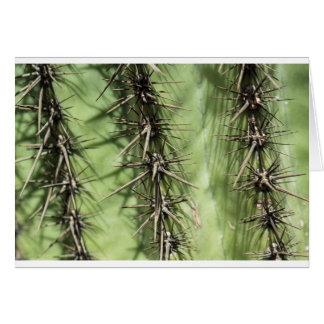 macro close up of cactus thorns card