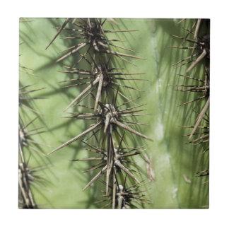 macro close up of cactus thorns ceramic tile