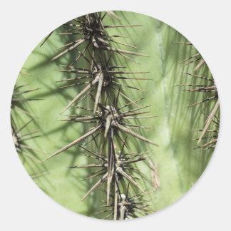 macro close up of cactus thorns round sticker