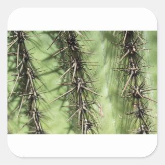 macro close up of cactus thorns square sticker